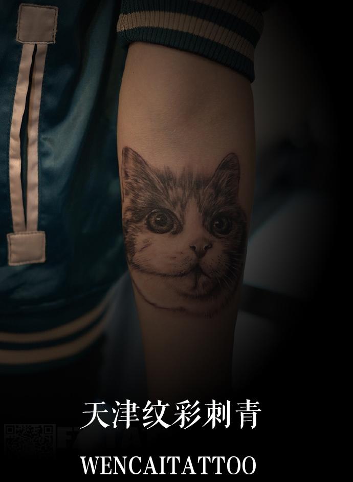 可爱的小姑娘小邓小臂内色猫头纹身